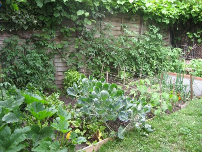 gardening in finsbury park london (11)