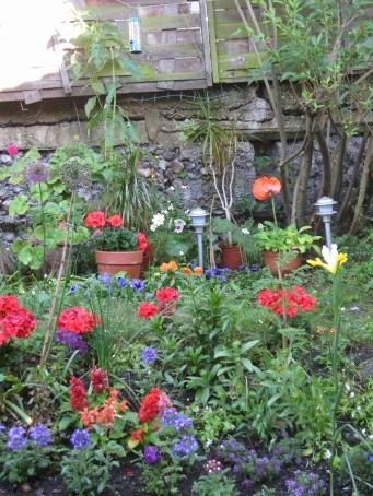 gardening in finsbury park london (3)