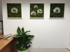 Office Plants in Green Park
