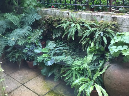A Courtyard Garden in Crouch End, London