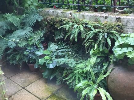 A Courtyard Garden in Crouch End, London