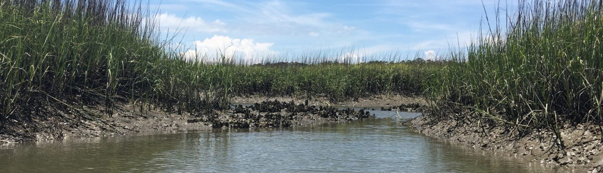 kayak marsh oysters