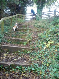 Steps to the stile