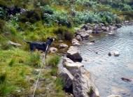 Dolly at Bay Lough