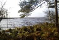 Fowlers Island, Lough Derg Choppy!