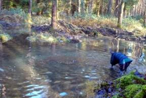 Dolly doggy paddling :-)