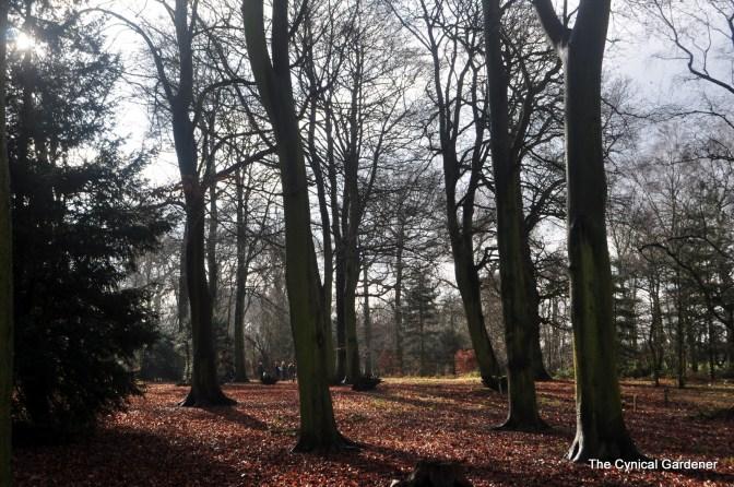 Wonderful Mature Trees.