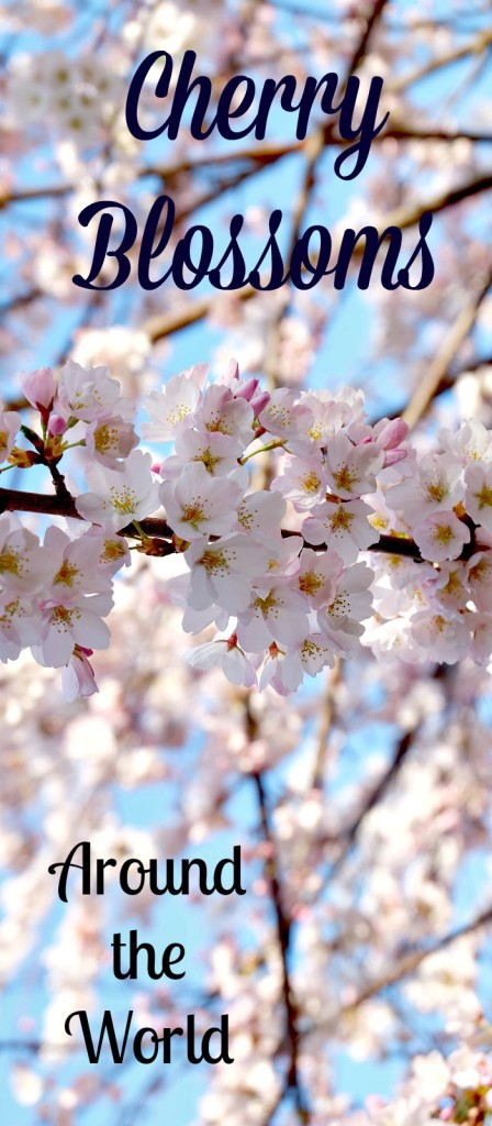 cherry blossoms around the world. The best place to view cherry trees in spring.
