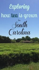 Charleston, South Carolina Road Trip: Southern Charm with a Side of Slave Tours and Tea