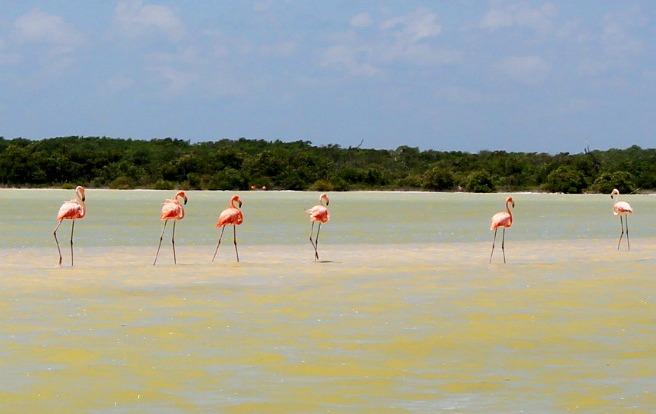 Flamingos in Ria Lagartos, Mexico. www.thedailyadventuresofme.com