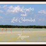 Rio Lagartos and Las Coloradas, Mexico- an Alligator River and a Pink Lake?