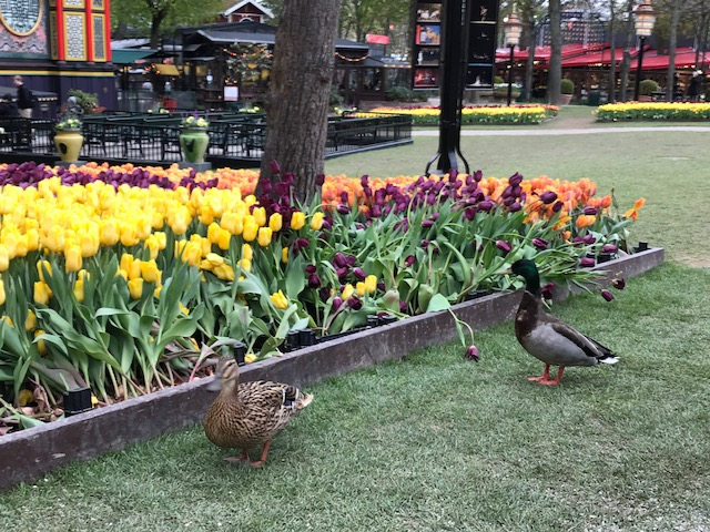 Spring at Tivoli Gardens, Denmark- The Daily Adventures of Me
