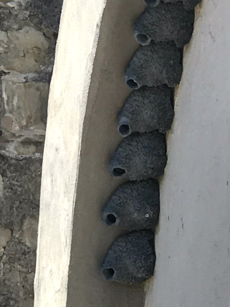 When do the swallows return to Mission San Juan Capistrano.