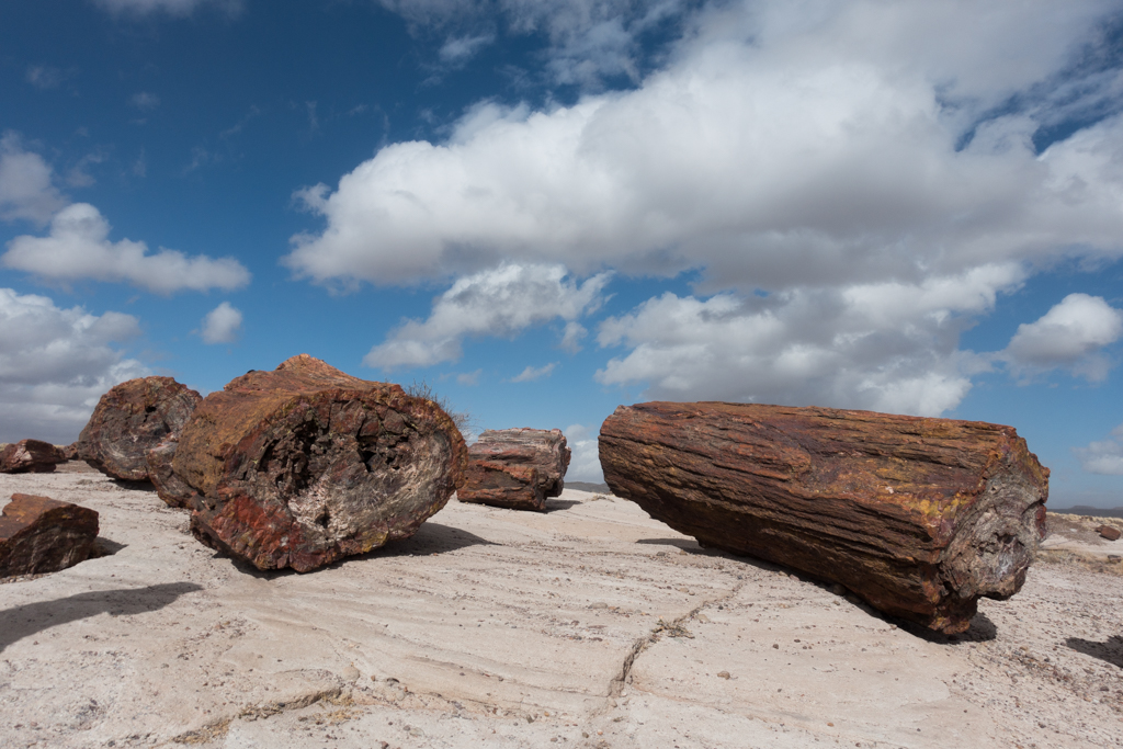 Arizona's Petrified Forest National Park and the Painted Desert