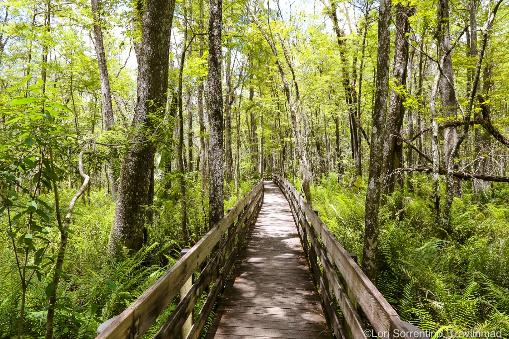 Why the Everglades in the best place to visit in Florida.