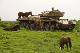 TOPSHOTS A picture taken on March 8, 2013 shows horses near a former Israeli tank in a field along the border between Syria and Israel, in the Golan Heights. AFP PHOTO / JACK GUEZJACK GUEZ/AFP/Getty Images ORG XMIT:
