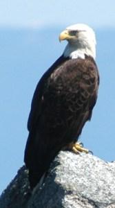 eagle3b