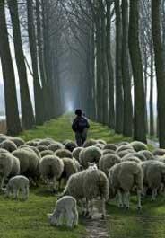 184x265_shepherd_istock