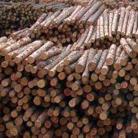 Latvian Logs
