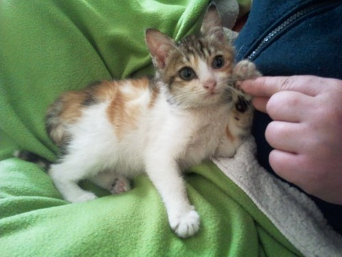 bucket the kitten gives some paw to one of her humans