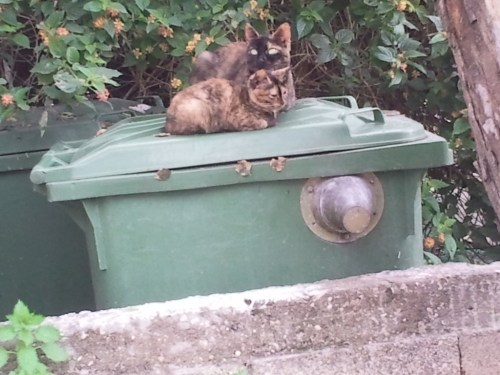 baby kitten and mother cat on top of a recycling bin