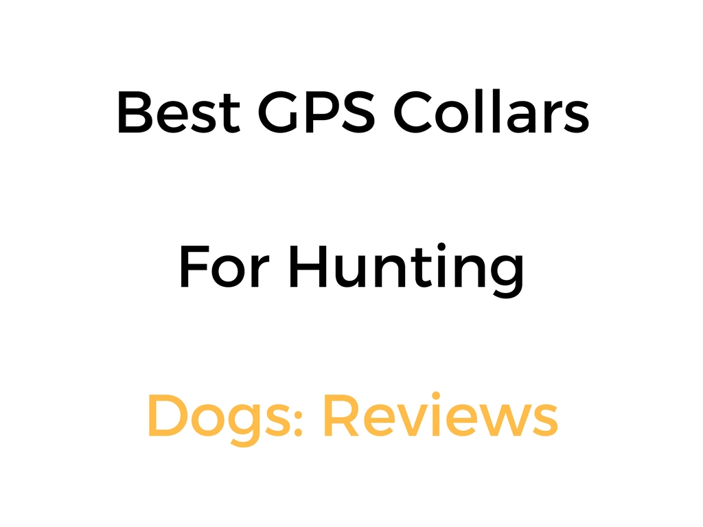 Best Gps Collar Amp Tracking Systems For Hunting Dogs
