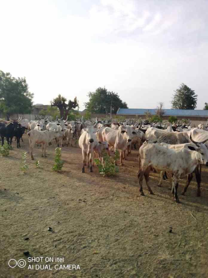 Katsina Police Command intensifies onslaught against recalcitrant bandits, others 4