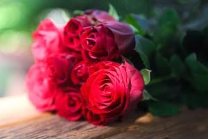 roses-687253_1920
