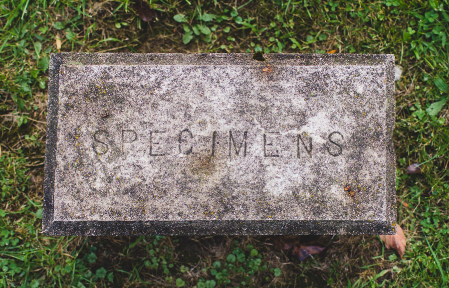 tico cemetery, cemetery, spooky, weird headstone, creepy, specimen