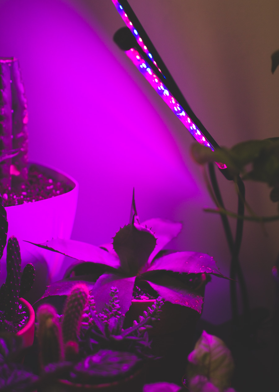 house plants, grow light, purple lamp