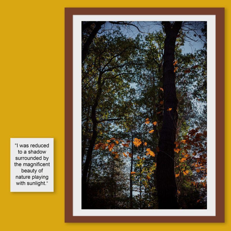 Autumn forest woods photography 2020 light leaves