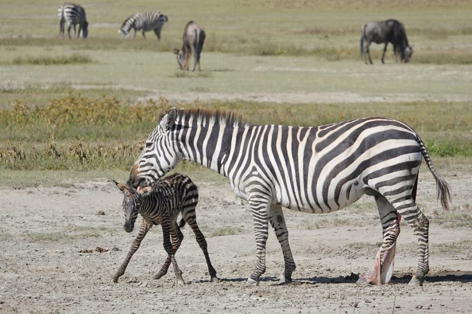 The baby zebra -- Our top 10 favorite safari honeymoon moments