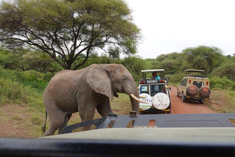 Elephant crossing the road -- Our top 10 favorite safari honeymoon moments