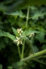 garden-9 small