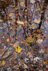 autumn mere-3 small