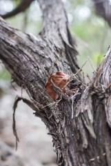 friedrich wilderness park san antonio-19 small