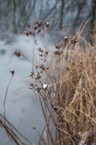 winter walk-17 small