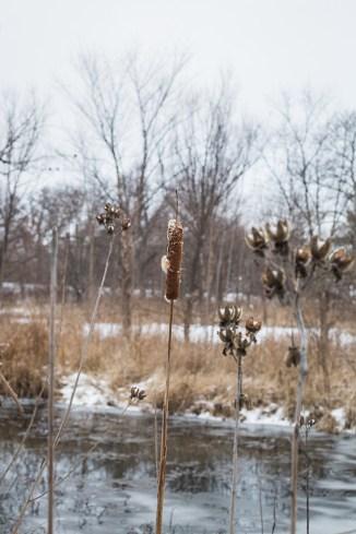 winter walk-18 small