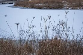 winter walk-23 small