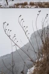 winter walk-4 small