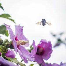 bumblebees-4 small