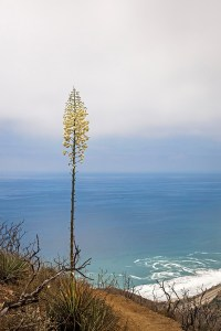 chaparral yucca marine layer point mugu state park-1 small