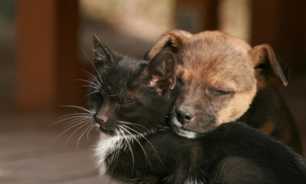 International Homeless Animals Day 'mews': Global 'howliday' helps save pets