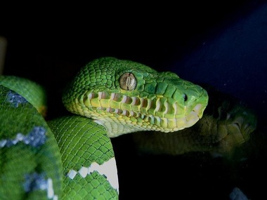 Pet Talk: National Reptile Awareness Day promotes education of misunderstood ...