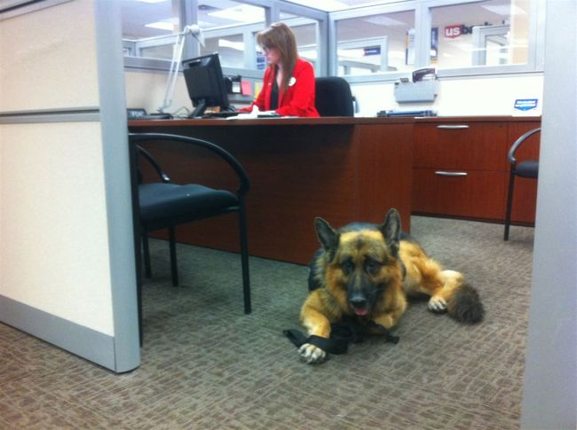 Tips for Take Your Dog to Work Day