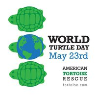 Great Barrier Reef under the spotlight for world turtle day – video