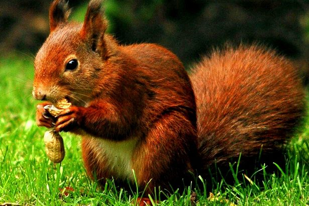 It's Squirrel Appreciation Day! Share your pics of our furry friends on Merseyside