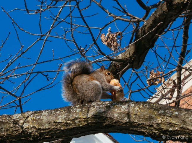 University students go nuts on Squirrel Appreciation Day