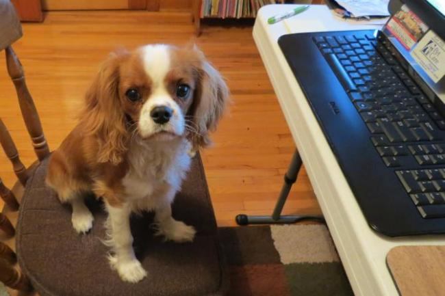 Take Your Dog To Work Day 2015: 7 Facts, Tips To Convince Your Boss And Things ...