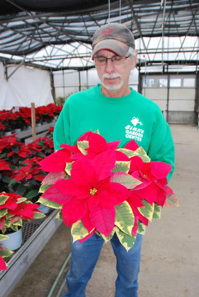 Buy local on Poinsettia Day